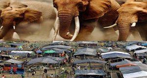 Dua Rohingnya Tewas Di Tenda Plastik, Usai Diinjak Gajah Liar